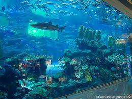 aquarium geant a visiter belgique visiter dubaï le temps d un week end carnet d escapades