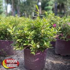 Guildford Garden Centre Perth WA Online Plant Nursery Gifts
