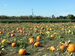Pumpkin Picking Places In South Jersey by Allamuchy Township Nj Real Estate Allamuchy Township Homes For