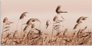 36 99 artland wandbild gräser gräser 1 stück in