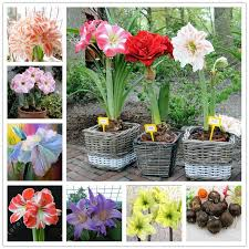 cheap flower highlighters buy quality flower seeds and bulbs