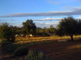 Pumpkin Patch Farm Temecula by Cid 46720a90 6ccc 49fe B160 79b2da7e4614 Socal Rr Jpg