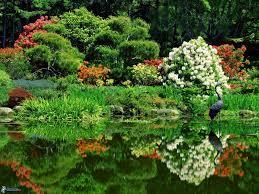 fleur et plante du lac jardin botanique