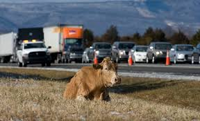 Cow Corralled Near Interstate | News, Sports, Jobs - The Northern ... We Loved Monster Jam Macaroni Kid Howa Hcrl92102mcc Multicam Bolt 243 Winchester 24 Stk Flat 48hour Crime Spree Icrossed Memphis Ridences In Fear Fox13 Potato Chip Deliveryman Shot Drug Store Robbery Nbc4 Washington Events Reedsportwinchester Bay Hebron Zacks Fire Truck Pics Trick Or Treat On Dtown Safety Street Halloween Event For Kids Nh State Police Investigate Injury To A Child Local Awesome Airsoft Collection Sawedoff 12 Gauge Shotgun Simple Trick Stump Pulling Using Log Chain Tire And Vehicle Trickortreating Hours Community News Sentinelsourcecom Trucks Seven Inc
