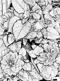 Explore Art Teachers Free Coloring And More Image Result For Realistic Pages Adults Nature