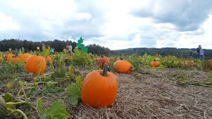 New Milford Pumpkin Festival Ct by Pumpkins Gourds Cider And Pie A Perfect Fall Day Jones And