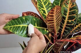 plantes vertes d interieur plantes d intérieur plante verte intérieur détente jardin