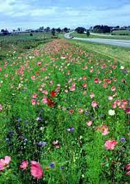 Garden Design Garden Design with Wild for Wildflowers National