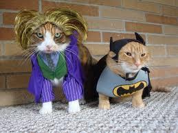 cat batman costume memes for cat costume dressed up kitties