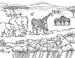 Coloring Book African Elephant Bull Page