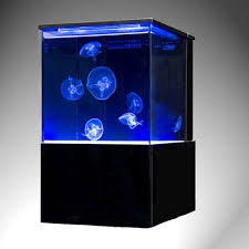 moon jellyfish care guide