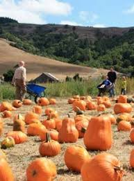 Pittsburgh Area Pumpkin Patches by Experience Fall Around Pittsburgh Pittsburgh U003c3 Pinterest