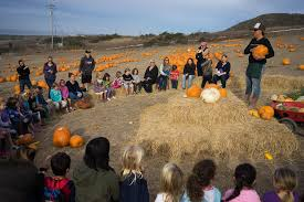 Half Moon Bay Pumpkin Patches 2015 by Which Holiday Food U0027shortages U0027 Should Actually Worry The Bay Area