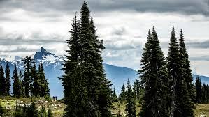 What Christmas Tree To Buy by Bike Magazine Mountain Bike Photos Reviews U0026 Trails