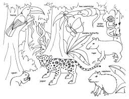 RainForest Mammals Coloring Pages Picture 16 Printable