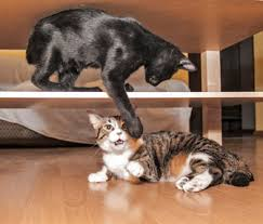 cat in house pets and relationships how to combine different cat households
