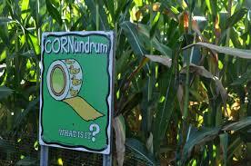 Sauvies Island Pumpkin Patch Corn Maze by Sauvie Island Pumpkin Patch Conscious Engagement