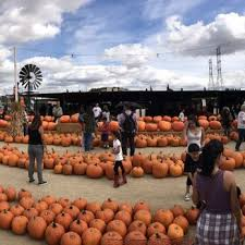 Pumpkin Patch Glendale Co by Forneris Farms 164 Photos U0026 102 Reviews Farmers Market 15200