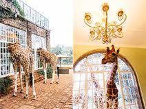 35 best Safari decorations images on Pinterest