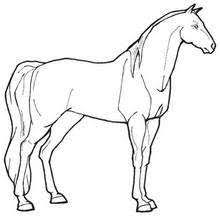 Big Horse Lovely Mare Coloring Page