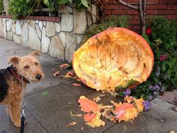 Using Pumpkin For Dog Constipation by Health Benefits Of Pumpkin For Pets U2013 Thanksgiving Food Good For
