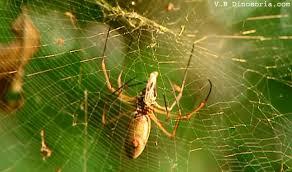 araignee toile de l araignee en images dinosoria
