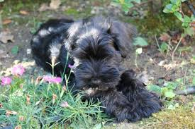 top 5 dog breeds that shed the least canna pet