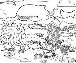 Sea Animals Colouring Worksheets Ocean Coloring Pages
