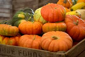 Monrovia Pumpkin Patch by Pumpkin Patches More Than Fun And Games For Local Farmers