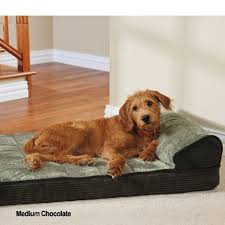 orthopedic foam dog beds ortholuxe lounger at drsfostersmith com