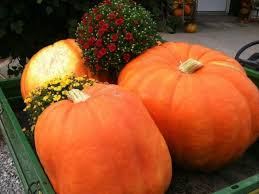Pumpkin Farms In Belleville Illinois by Pumpkin Blossom Hill Celebrating The Best Of Fall