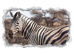 3d wandtattoo zebra afrika tier baum wüste tapete wand aufkleber wanddurchbruch sticker selbstklebend wandbild wandsticker wohnzimmer 11p1344