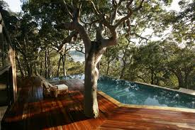 Best Plant For Bathroom Australia by Swimming Pool Landscaping Ideas