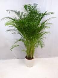 große pflanzen fürs wohnzimmer top 5 preisvergleich
