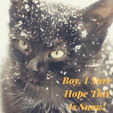 my cat has dandruff top 5 methods to removing cat dandruff in your home