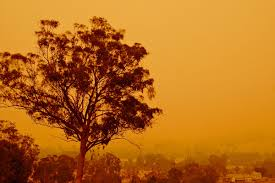 Pinery Christmas Trees by Bushfires In Australia Wikipedia