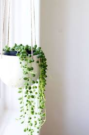 Small Plants For The Bathroom by Best 25 Hanging Terrarium Ideas On Pinterest Hanging Plants