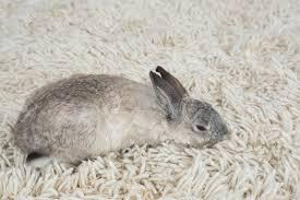 kaninchen schlafen auf dem boden zu hause im wohnzimmer