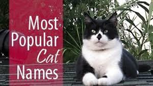 popular cat names most popular cat names