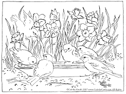 Spring Birds Coloring Pages Adult