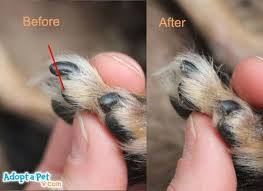 how to cut a cats nails best 25 trimming nails ideas on grooming tips