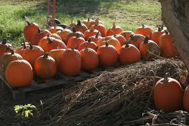 Where Did Pumpkin Patch Originate by 17 Pumpkin Patches In Central Arkansas To Visit This Fall Little
