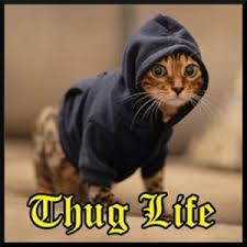 thug cat thug android apps on play