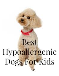 Non Shedding Dog Breeds Small by Best Hypoallergenic Dogs For Kids Dogvills