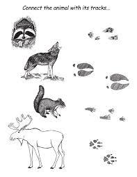 Animal Tracks Clipart