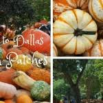 Pumpkin Patches Near Dallas Tx 2015 by The 2017 Dallas Pumpkin Patch Guide