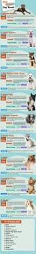What Kind Of Dogs Shed The Most by Top 10 Dog Breed For Runners Yourpetclip Viral Pet Stories