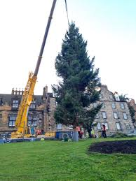 10ft Christmas Tree Uk by Conifox Edinburgh Christmas Trees To Buy From Our Garden Centre