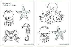 Download The Sea Invertebrates Template