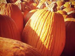 Pumpkin Patch Bastrop County by The Best Pumpkin Patches In And Around Austin Updated